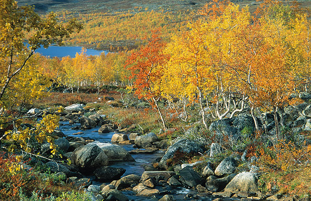 Autumn Colours, Finnland