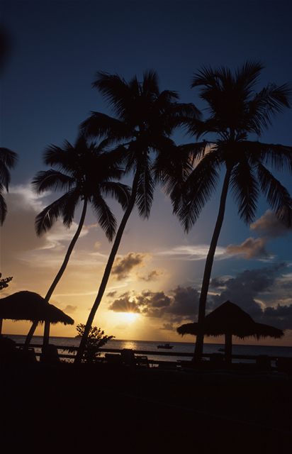 Sonnenuntergang unter Palmen - Sunset with Palm Trees, Antigua & Barbuda
