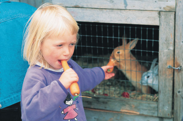Brunlanes Stavern Vestfold farm holiday girl feeding rabbits portrait, Norwegen