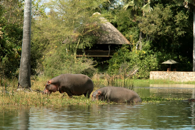 Mvuu Wilderness Lodge im Liwonde-Nationalpark