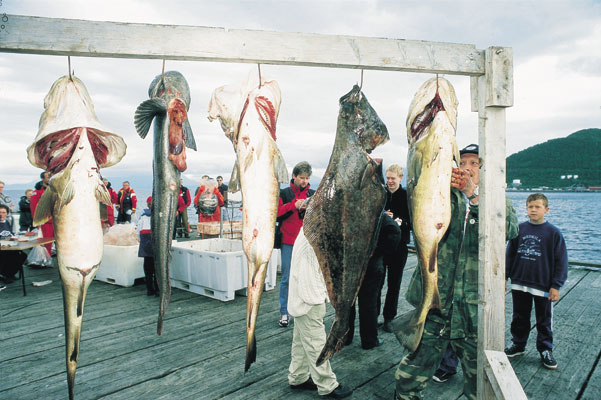Harstad Fishing festival Weighing of catch Cod Halibut Ling, Norwegen